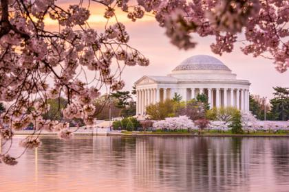 1 Day Washington D.C Cherry Blossom Tour